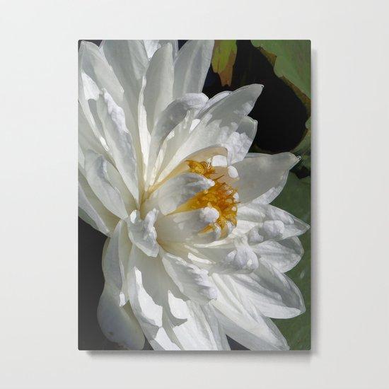 Lotus White Metal Print