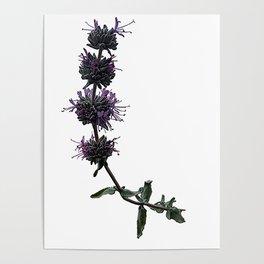 Ojai: Purple Sage Poster