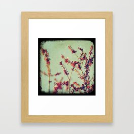 Morning Mild Framed Art Print