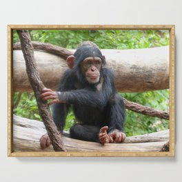 Chimpanzee_20150503_by_JAMFoto Serving Tray