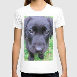 Black Labrador Dog on Grass T-shirt