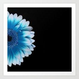 colored summer ~ blue and black gerbera Art Print