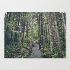 A walk through the trees Canvas Print
