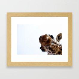 Playful Giraffe Framed Art Print