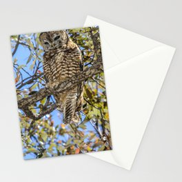 owl. Mexican spotted owl Stationery Cards