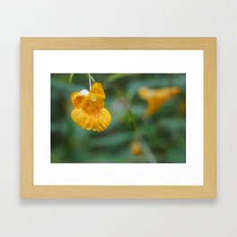 Jewelweed Blossom Framed Art Print