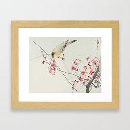 Songbird on blossom branch Framed Art Print
