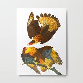 Caracara Eagle Illustration Metal Print