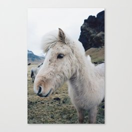 White Horse in Iceland Canvas Print