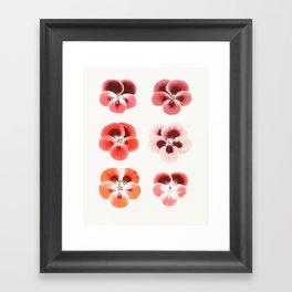 Pansy Framed Art Print