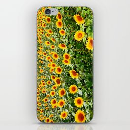 Field of Sunny Flowers iPhone Skin
