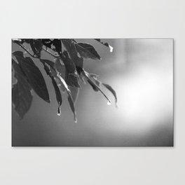 Crying Tree Canvas Print