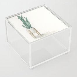 Potted Plant in White Space Acrylic Box