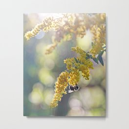 Bee on Yellow and Green Goldenrod Metal Print