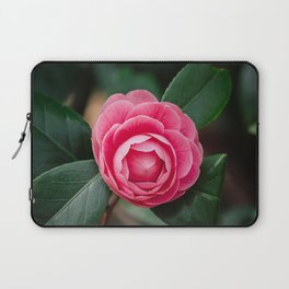 Pink Perfection Camellia Japonica Blooms in Spring Laptop Sleeve