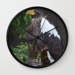 National Aviary - Pittsburgh - Stellers Sea Eagle 1 Wall Clock