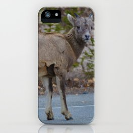 Big horn sheep stops to pose in Jasper National Park iPhone Case