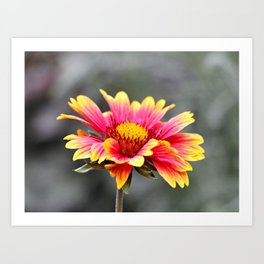 Sun in Bloom Art Print
