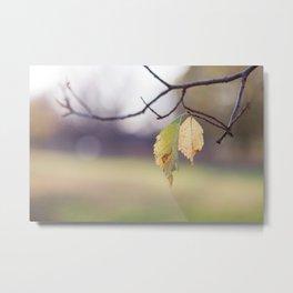 Late Autumn Metal Print