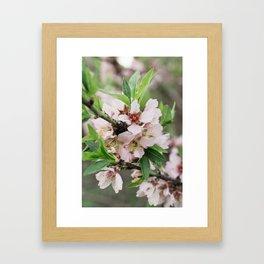 Flor de cerezo Framed Art Print