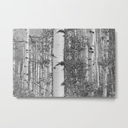 Black and White Birch Trees Metal Print
