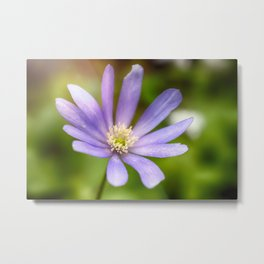 The Flower Eaten Metal Print