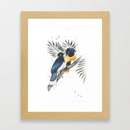 Jay Birds Framed Art Print