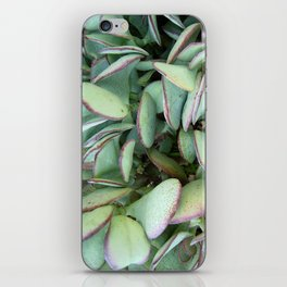 Silver Dollar Succulent  iPhone Skin