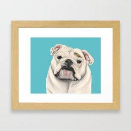 Sweet Little English Bulldog Framed Art Print