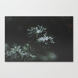 Forever Evergreen Canvas Print