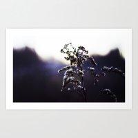 Wild Winter Plant Art Print