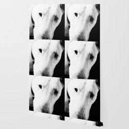 Confused English Bull Terrier Wallpaper