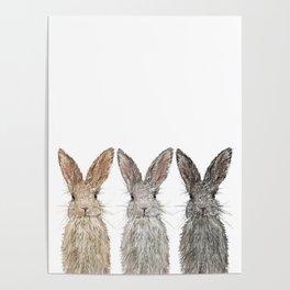 Triple Bunnies Poster