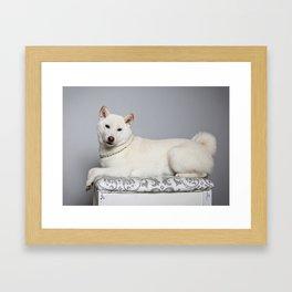 Cream Shiba Inu Dog Framed Art Print