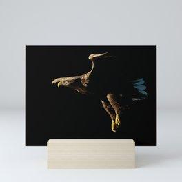 White-Tailed Eagle in Flight Mini Art Print