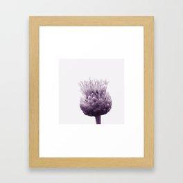 Monochrome - Centaurea Framed Art Print