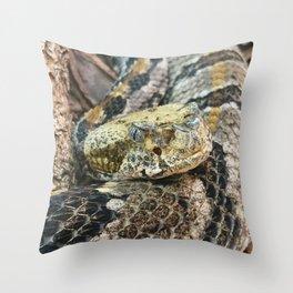 Timber Rattlesnake Close Up Throw Pillow