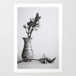 Ornithogalum Art Print