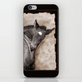 Black Foal Scratching (softcanvas) iPhone Skin