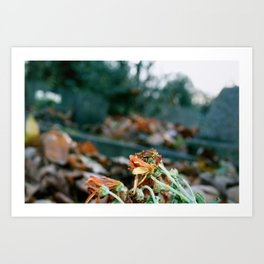Come Autumn Art Print