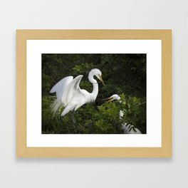 Great Egrets Nesting Framed Art Print