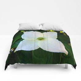 Kousa Dogwood Flower Comforters