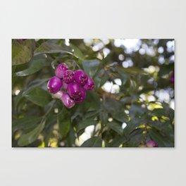 blackberry love Canvas Print