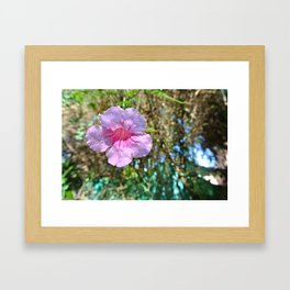 Flower in light at Jardin Majorelle Framed Art Print