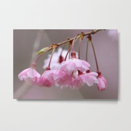 Dragonfly in Blossoms Metal Print