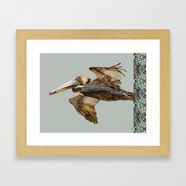 Brown Pelican Flight with Vintage Seafoam Stripe Framed Art Print