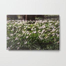 Wood Anemone Field Metal Print