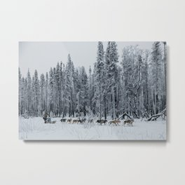 SNOW - DOGS - HUSKIES - SLED Metal Print