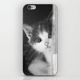 Street Cats iPhone Skin