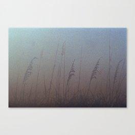 beach wheat Canvas Print